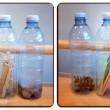 bottiglie1 collage